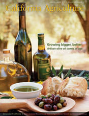 california-agriculture-magazines-spotlight-on-olive-oil