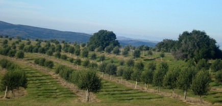 uruguayan-olive-oil-production-expected-to-grow-the-groves-of-uruguayan-olive-oil-producer-finca-babieca