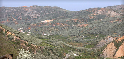olive-oil-flows-at-harvest-time-on-crete