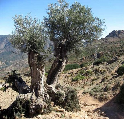 innovative-study-analyzes-soil-loss-in-andalusian-olive-groves