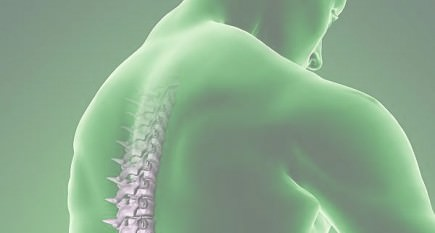 study-finds-benefits-of-olive-oil-and-albumin-for-treatment-of-spinal-injuries