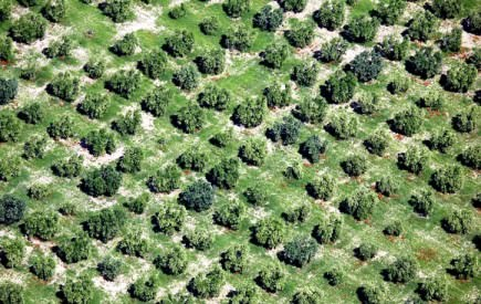 spanish-olive-oil-under-constant-threat-from-climate-change