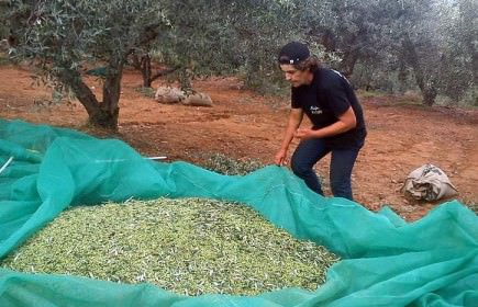 how-terra-creta-makes-and-markets-olive-oil
