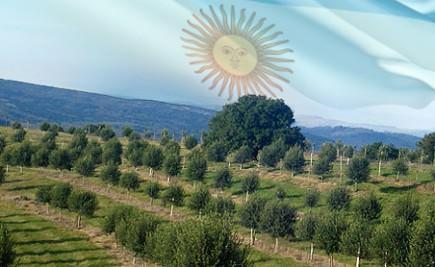argentina-declares-olive-oil-a-national-food