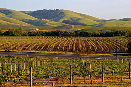 napa-valley-olive-oil-competition-opens-to-producers-of-all-sizes