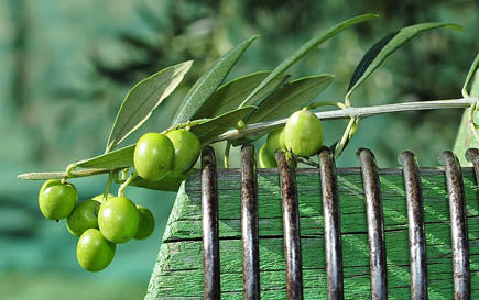 spain-selling-less-buying-more-olive-oil
