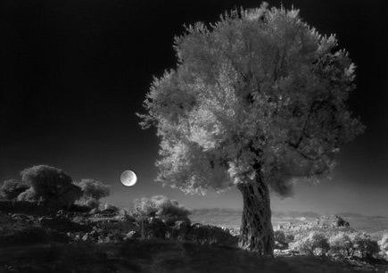 harvesting-under-the-moon-night-harvest