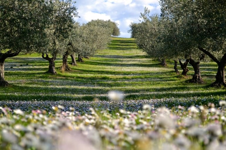 san-martino-to-host-third-edition-of-extrascape-a-winning-olive-oil-landscape-extrascape-is-also-a-photographic-contest