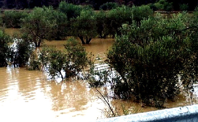 ruinous-floods-in-liguria-add-to-poor-outlook-for-italian-production