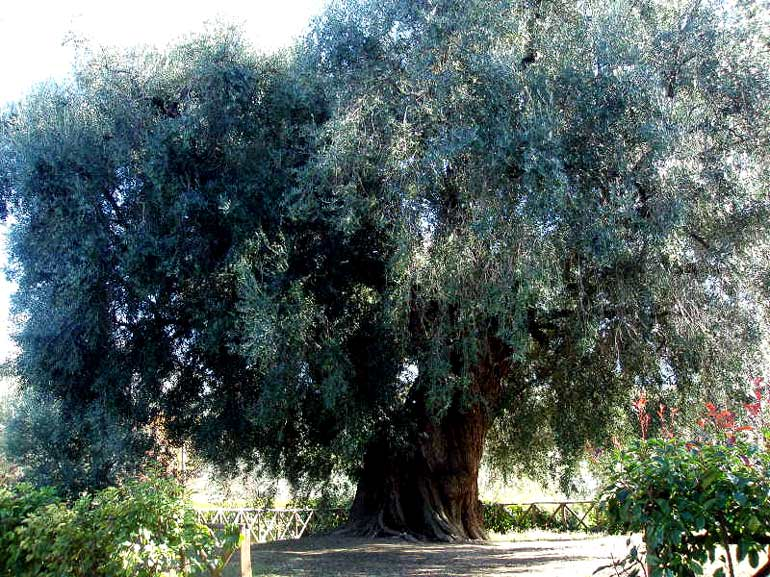 lulivone-sabinas-tree-of-the-ages