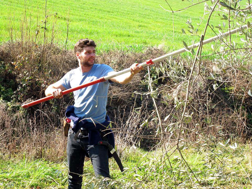 italy-crowns-pruning-champ
