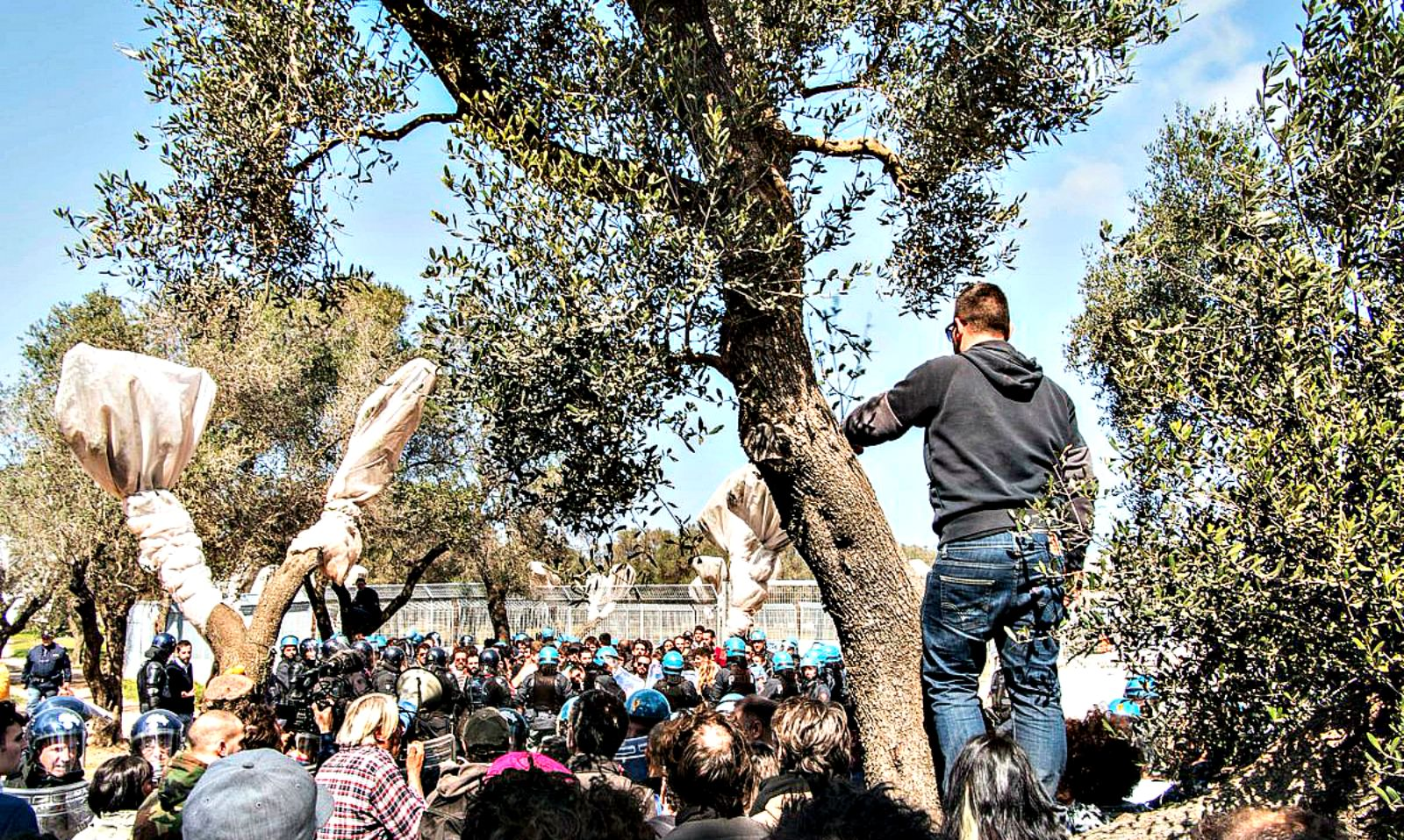 new-clashes-in-puglia-as-42-olive-trees-are-moved-for-pipeline